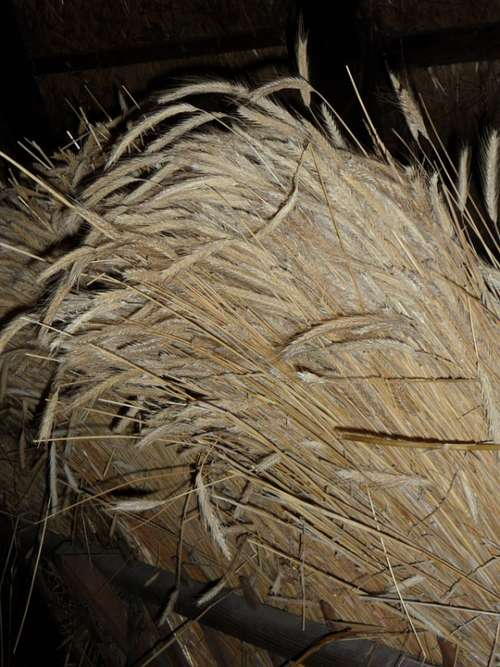 Sheaf Cereals Bundle Tufts Grain Harvest Spike