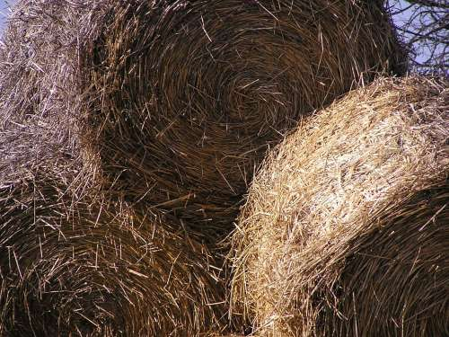 Sheaves Hay Azienda Agricola Chaudhary