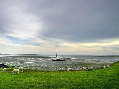 Sheep Boat Island Animal Farm Mammal Farming