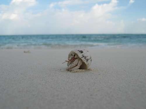 Shell Creature Beach Maldives Sand Crab Peek