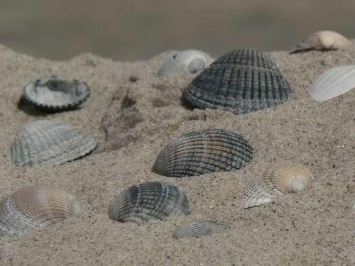Shell Beach Sea