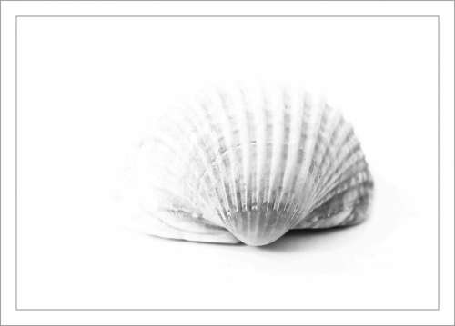 Shell Close Up Sea Animal Nature Animal