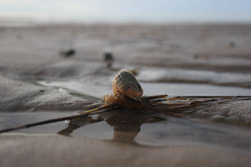 Shell North Sea Wadden Sea Sea Beach Ebb Sky