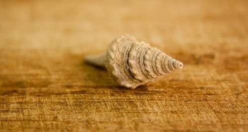 Shell Sea Snail House Spiral Seashell Marine