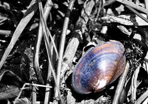 Shells Dead Shells Snails Fossil Fossilized