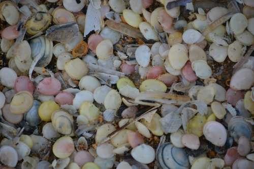 Shells Nature Colors