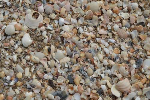 Shells Macro Beira Mar Mar