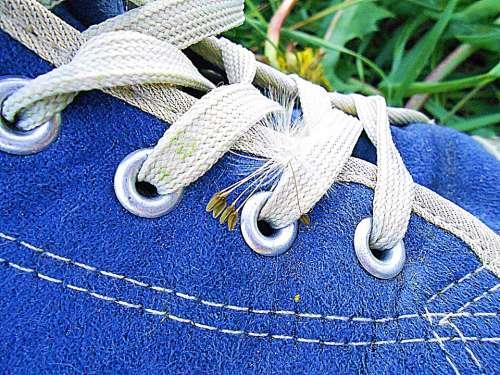 Shoe Blue Shoelace Chmíří Dandelion Detail Plant