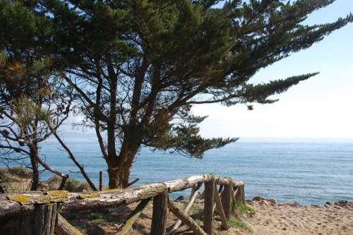 Side Landscape Beach Pine