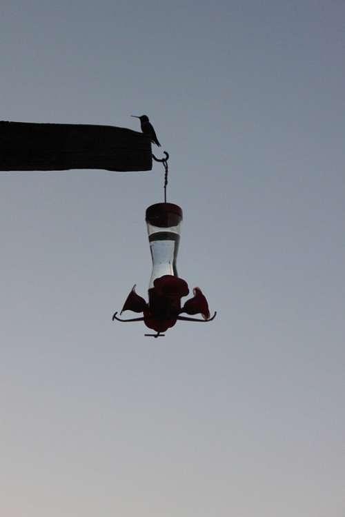 Silhouette Dusk Hummingbird Hummingbird Feeder