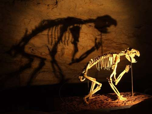 Skeleton Dinosaurs Cave
