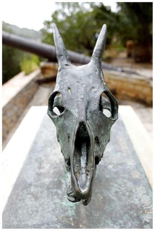 Skeleton Skull And Crossbones Skull Bone Trophy