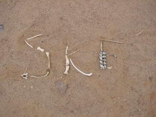 Skeleton Coast Desert Bone
