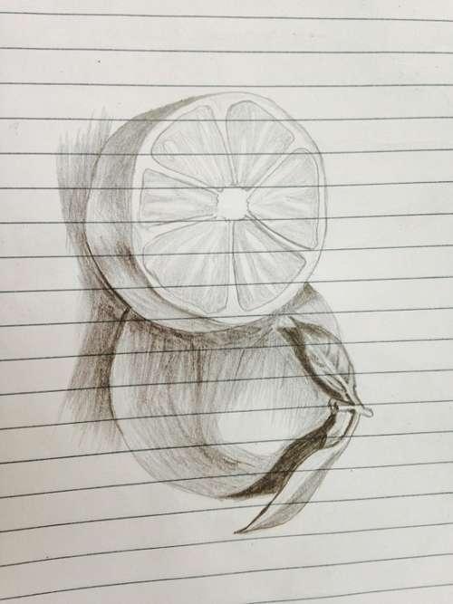 Sketch Orange Pencil Drawing