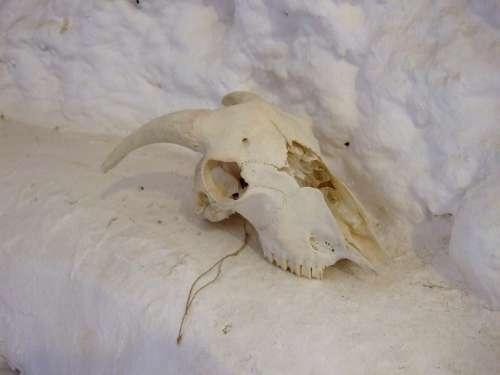 Skull Goat Andalusia Granada Spain Cave