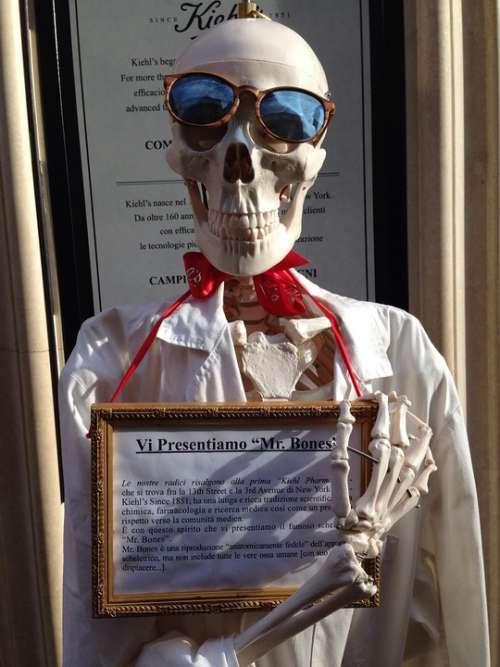 Skull Showcase Skeleton