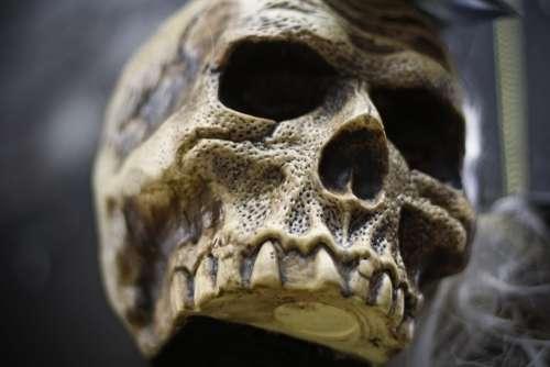Skull Mask Decoration Halloween Seasonal Costume