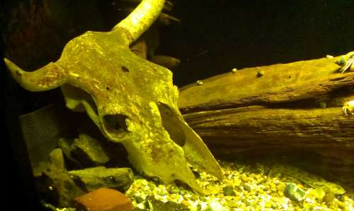 Skull Water Aquarium Wood Underwater Green