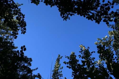 Sky Trees Tree Tops Foliage Poplars Leaves Forest