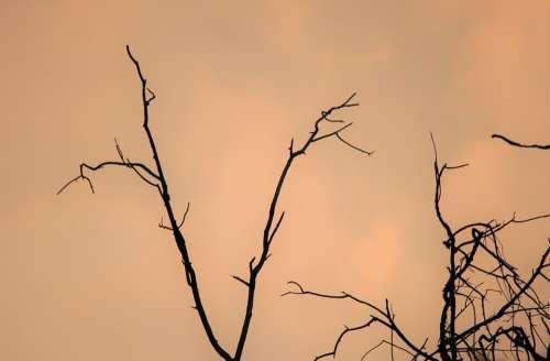 Sky Overcast Sunset Cloud Pink Soft Tree
