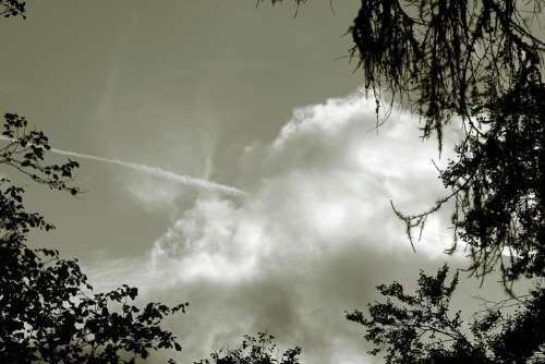 Sky Cloud Clouds Trees Heaven Nature