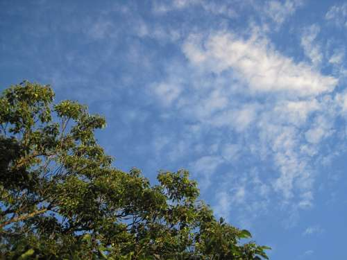 Sky Blue Cloud White Feather Scanty Tree Top