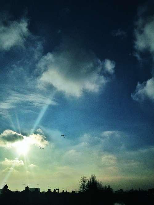 Sky Light Sunshine Sun Birds Clouds Nature