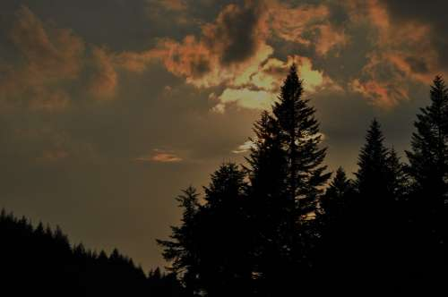 Sky Clouds Sunset Tree Forest Spruce Evening