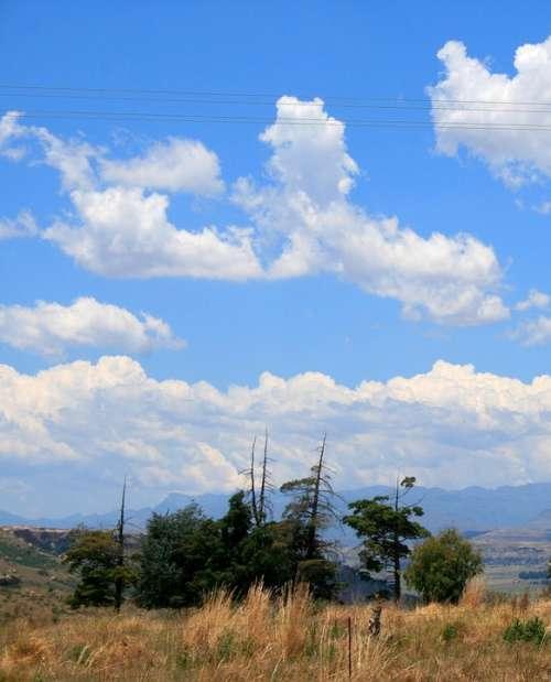 Sky Blue Clouds Veld Grass Trees Veld And Sky