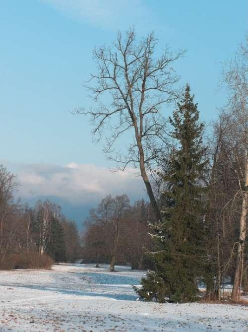 Sky Park Trees Spring Snow Clouds