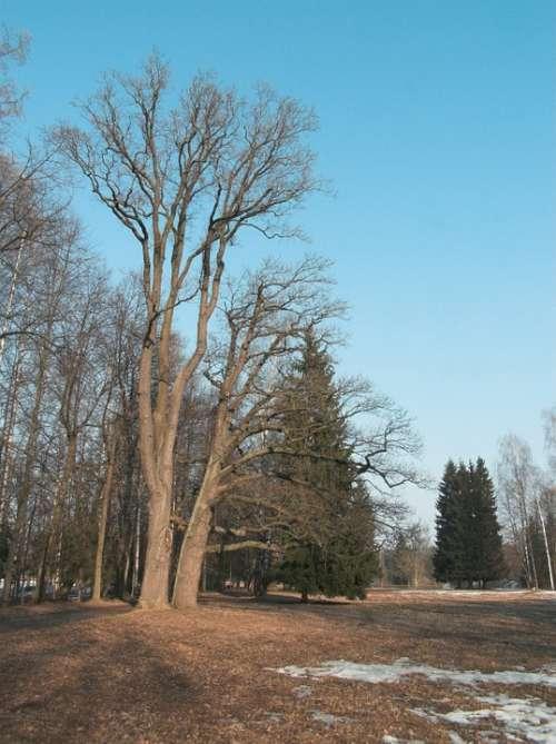 Sky Park Trees Spring Snow Sunny