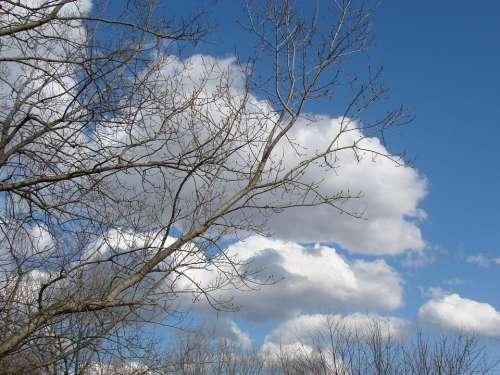 Sky Clouds Blue Tree Nature Sunshine Landscape