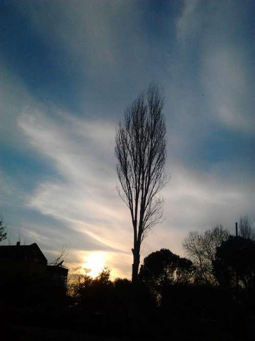 Sky Virgo Tree