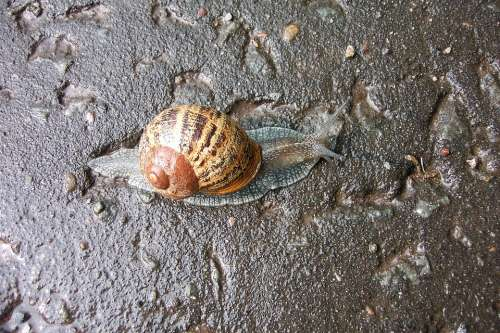 Slug Slow Animal Nature Snail Shell Brown Garden