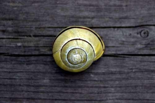 Snail Garden Shell Yellow Mollusk