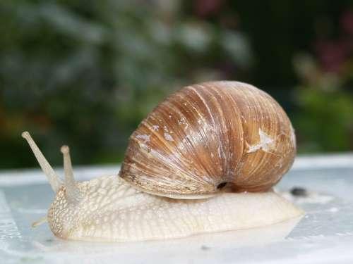 Snail Nature Animals