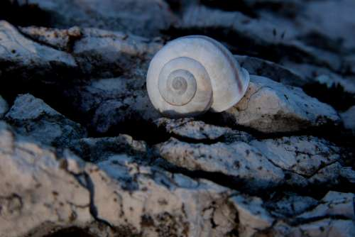 Snail Shell Rock Marble Weathered Stone