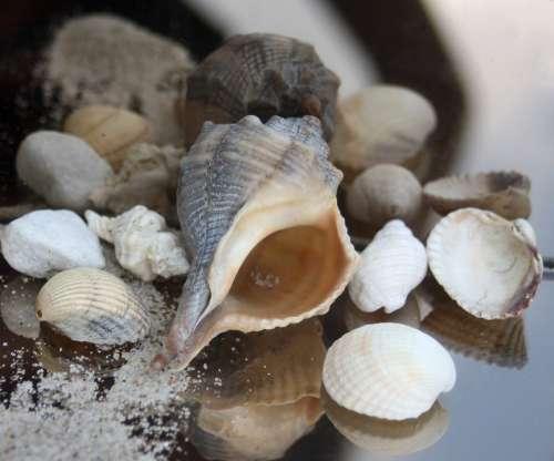 Snail Casing Maritime Sand Beach Timeless