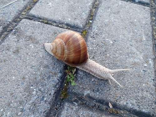 Snail Shell Snail Shell Escargots Mollusk