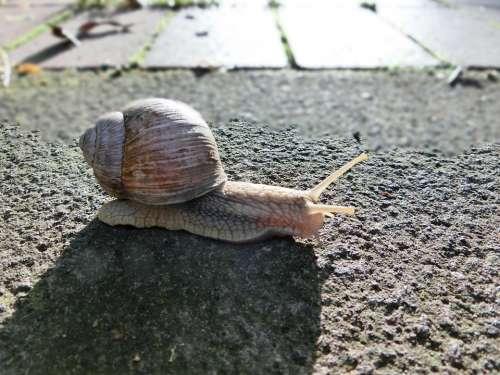 Snail Animal Shell Nature Macro Snail Shell