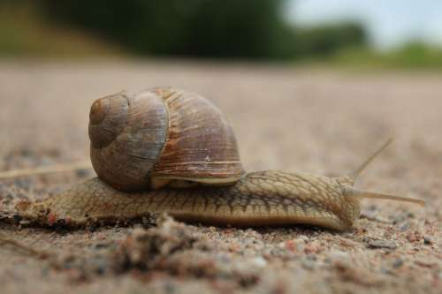 Snail Animal Molluscum Shell Antennas Baby Bibs