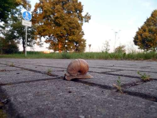 Snail Shell Mollusk Snail Shell Slowly