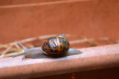 Snail Shell Slime Nature Animal Spiral Slow