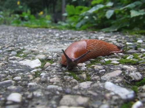 Snail Bend Fit Run Across Speed Animal Nature