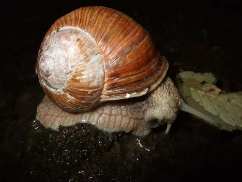 Snail Shell Mucus Reptile Mollusk Slowly