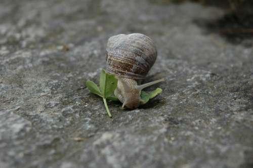 Snail Animal Rock Speed House Trace
