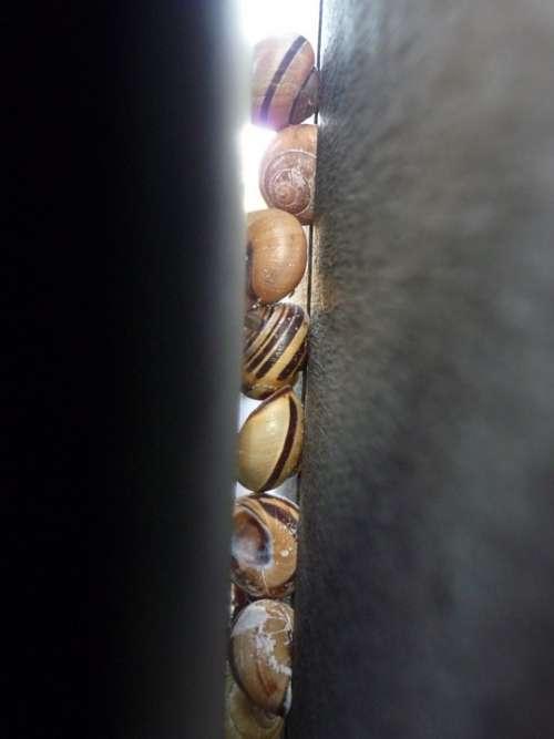 Snail Shell Gap Crack Snails