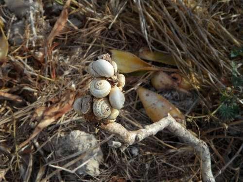 Snails Shell Snail Shells Loading Eng Many