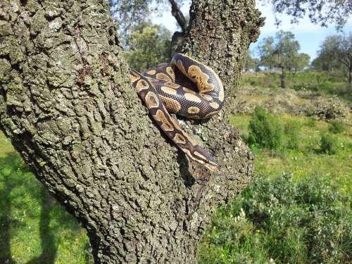 Snake Animals Nature Fauna