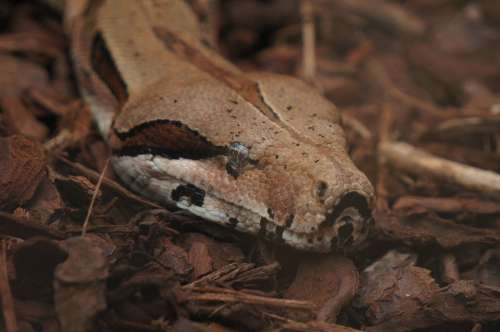 Snake Zoo Animal